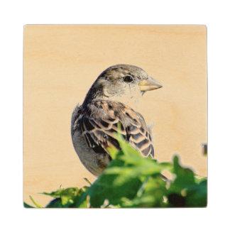 Delightful Bird Wood Coaster