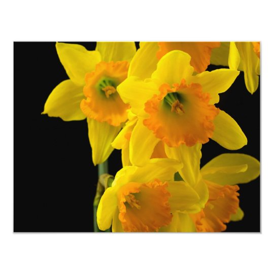 Delightful Yellow and Orange Daffodils Card