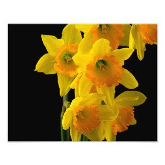 Delightful Yellow and Orange Daffodils Photo