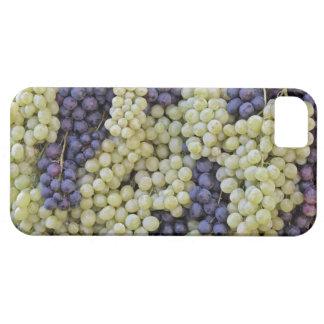 dell'Uva de Festa del La iPhone 5 Carcasas