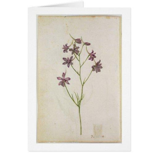 Delphinium ajacis, c.1568 card