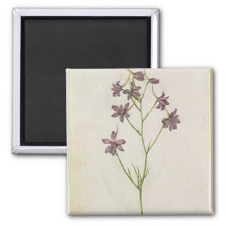 Delphinium ajacis, c.1568 2 inch square magnet
