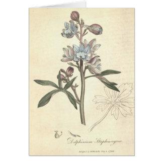 Delphinium Card