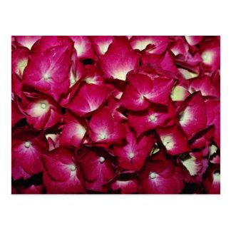 Delphinium  flowers postcard