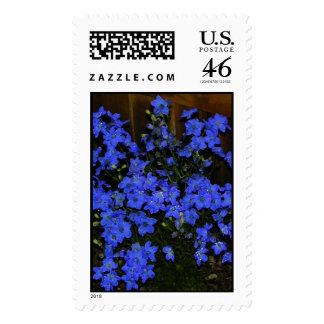 Delphinium Stamp