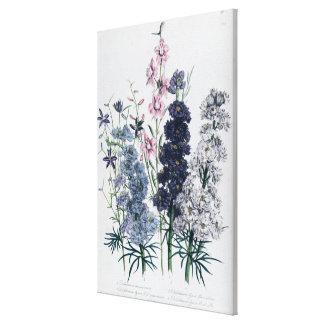 """Delphiniums, de la flor Garden """"de las señoras"""" Impresión De Lienzo"""