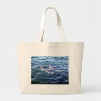 Delphinus delphis bag