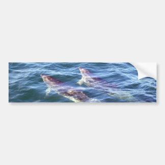 Delphinus delphis car bumper sticker