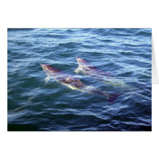 Delphinus delphis greeting card