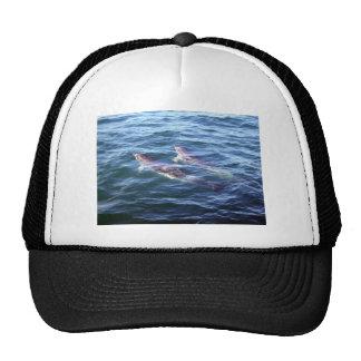 Delphinus delphis trucker hat