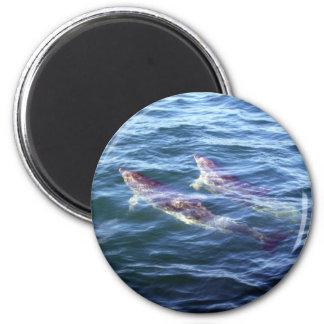 Delphinus delphis refrigerator magnet