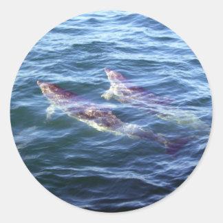 Delphinus delphis classic round sticker