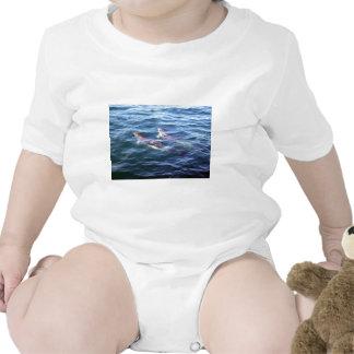 Delphinus delphis bodysuits