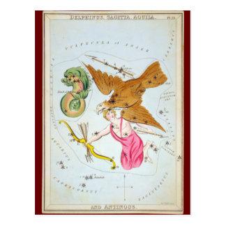 Delphinus, Sagitta, Aquila, and Antinous Postcard