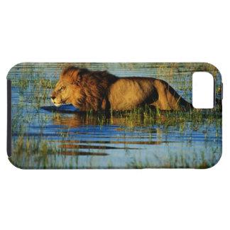 Delta de Okavango, Botswana 3 iPhone 5 Fundas