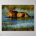 Delta de Okavango, Botswana 3 Poster