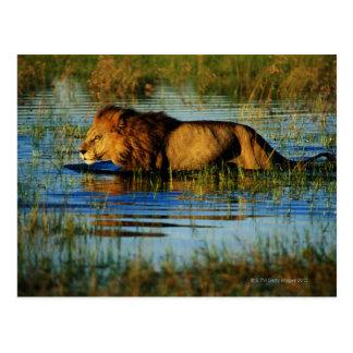 Delta de Okavango, Botswana 3 Tarjeta Postal