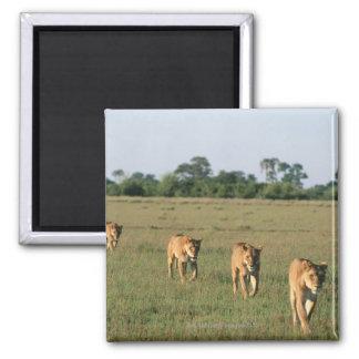Delta de Okavango, Botswana 4 Imán Cuadrado