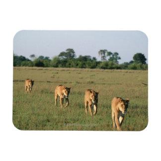 Delta de Okavango, Botswana 4 Imán Rectangular