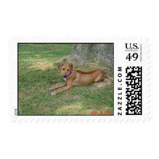 Delta Postage Stamp