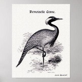 """""""Demoiselle Crane"""" Vintage Illustration Print"""