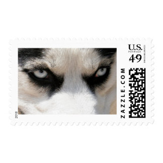 Demonio 4 del husky siberiano envio