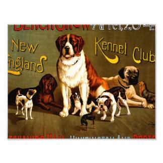 Demostración de banco. Club de la perrera de Nueva Fotografías