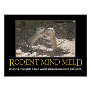 Demotivational Poster: Squirrel Mind Meld Poster at Zazzle
