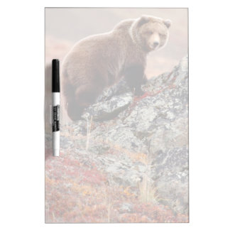 Denali Brown Bear Dry Erase Board