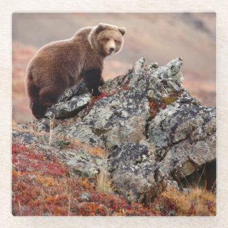 Denali Brown Bear Glass Coaster