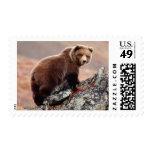 Denali Brown Bear Postage Stamp
