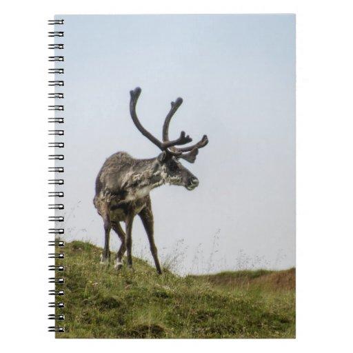 Denali Caribou Alaska Notebook
