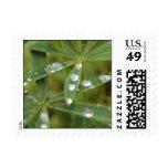 Denali droplet postage stamps