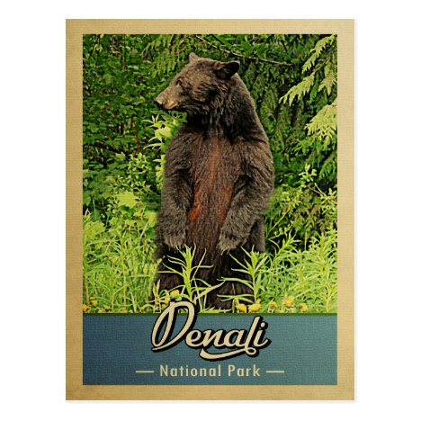 Denali National Park Vintage Bear Postcard