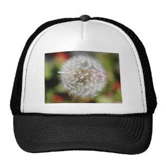 Dendelion Trucker Hat