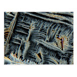 Dendritic crystals under the microscope post cards