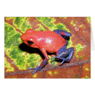 Dendrobates pumilio - Strawberry Poison Dart Frog Greeting Card