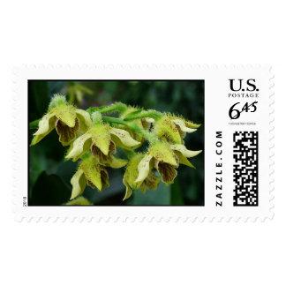Dendrobium finisterrae stamp