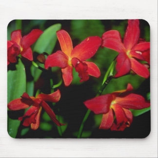 Dendrobium flowers mouse pads