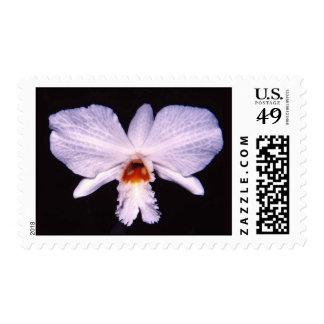 Dendrobium infundibulum postage