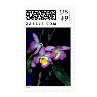 Dendrobium nobile sellos