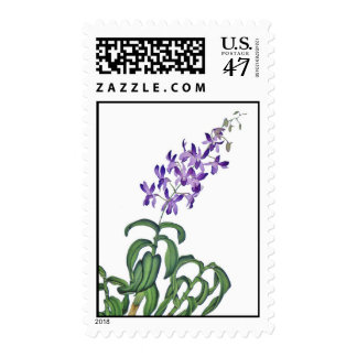 Dendrobium Orchid Spray Postage