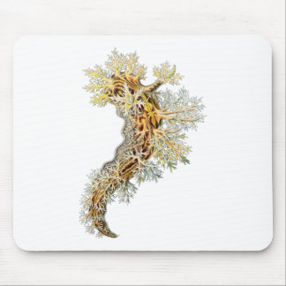 Dendronotus Mouse Pad