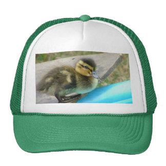 Denny el gorra del pato