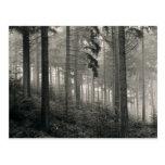 Dense Forest Photo Design Postcard
