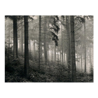 Dense Forest Photo Design Postcards