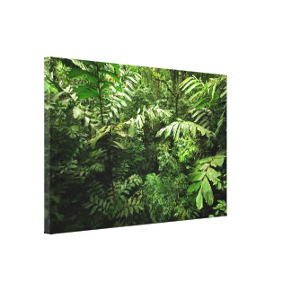 Dense Tropical Rain Forest Gallery Wrapped Canvas