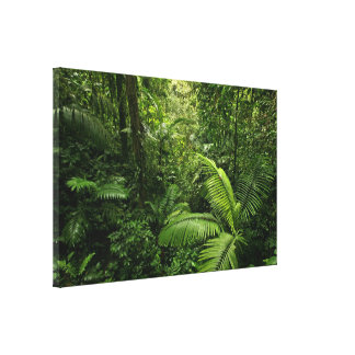 Dense Tropical Rain Forest Stretched Canvas Prints