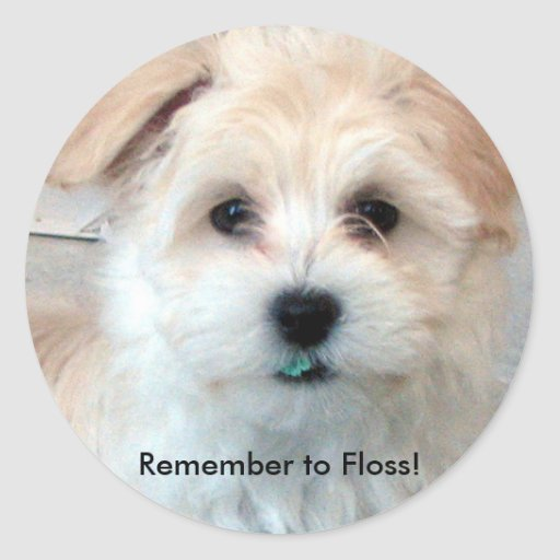 Dental Care puppy sticker