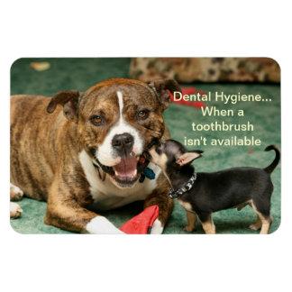 dental hygiene magnet